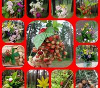 Для любителей грибов и ягод